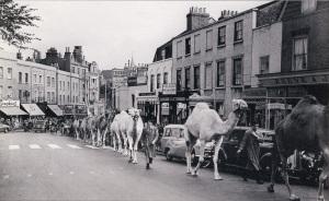 blackheath_camels