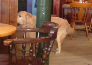 Hare and Billet Pub, Blackheath.  Dog