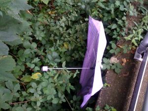 Umbrella dumped at Blackheath Station