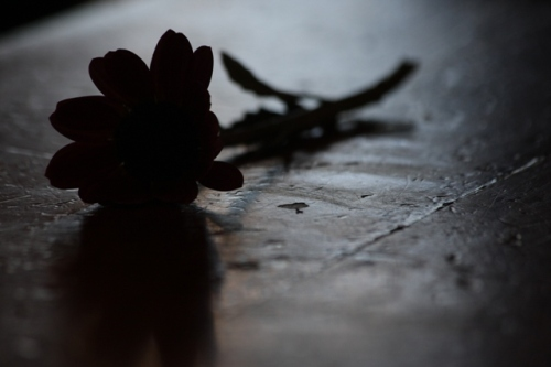Dead flower by Nina Matthews Photography on Flickr