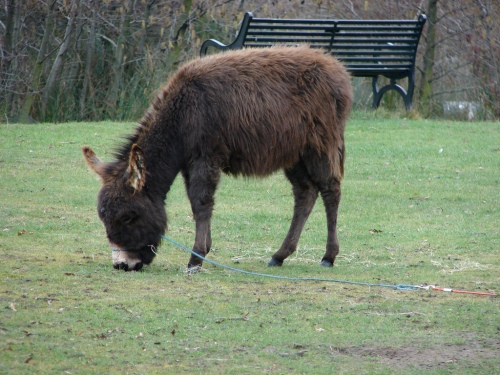 A donkey on blackheath by flickr user Eat Your Greens