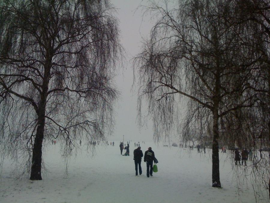 Snow in Blackheath on the heath 2013